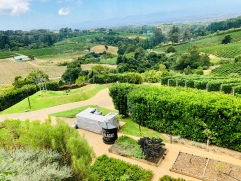 Constantia vineyard